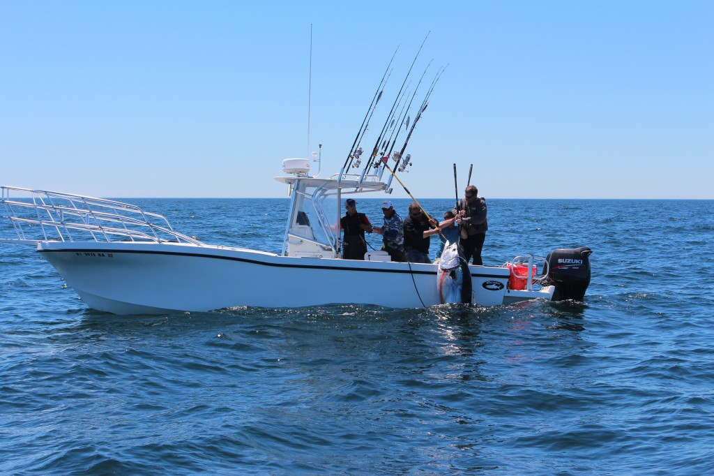 400 plus pound fish coming over the rails of Coastal Charters Sportfishing's Dusky 256!