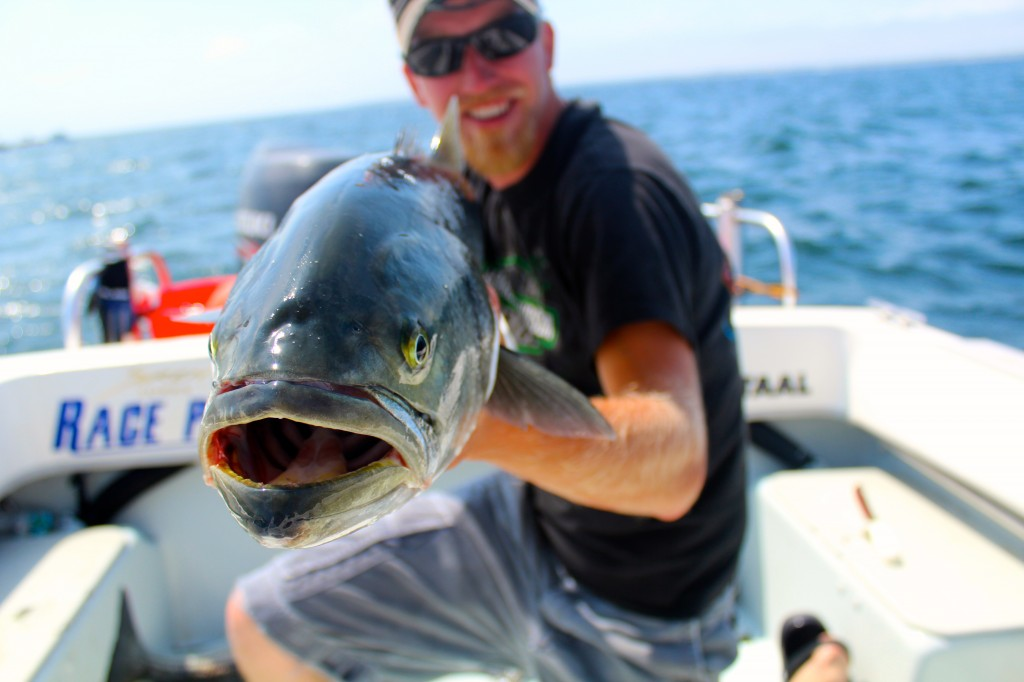 A hefty bluefish scored on ultra light tackle. These feisty fish make great sport and when handled properly great table fare as well!